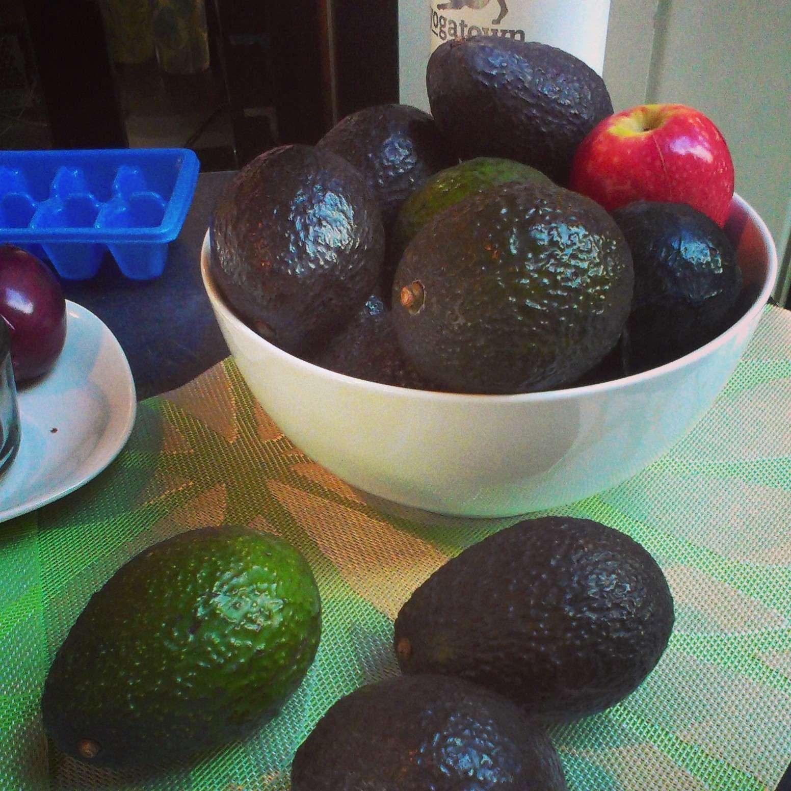 avocado times